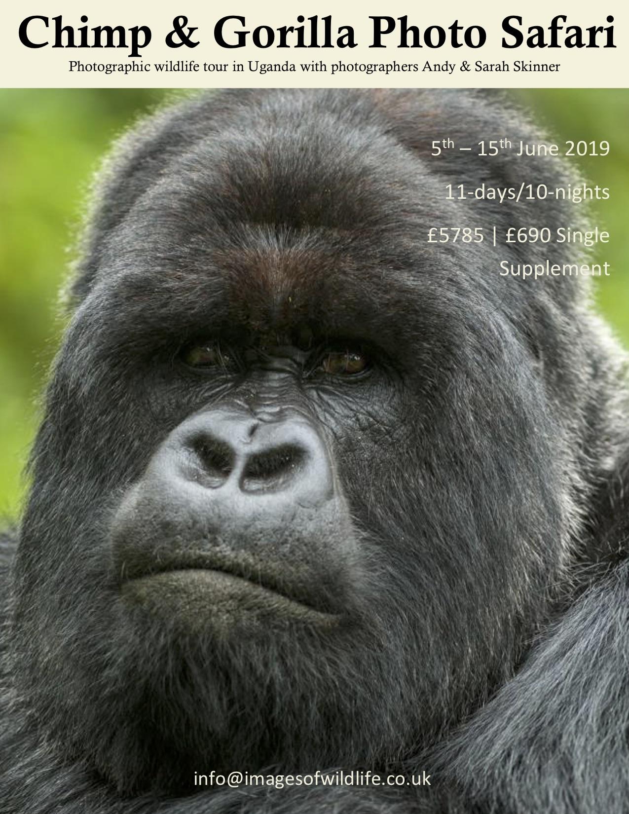 gorilla photo tour